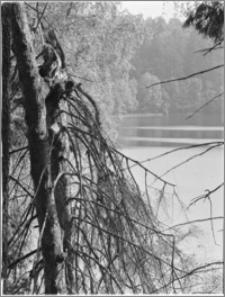 Kanał Augustowski [Widok z rezerwatu Perkuć na jezioro Mikaszewo]