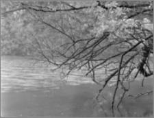 """Kanał Augustowski [Rezerwat """"Perkuć"""". Brzeg jeziora Mikaszewo]"""