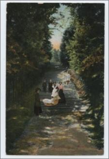 Lauenburg i. Pomm : Treppe z. Wilhelnishöhe