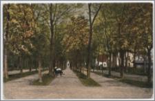 Inowrocław. Aleje w Solankach