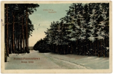 Poznań - Puszczykowo Droga leśna, Unterberg Waldpartie